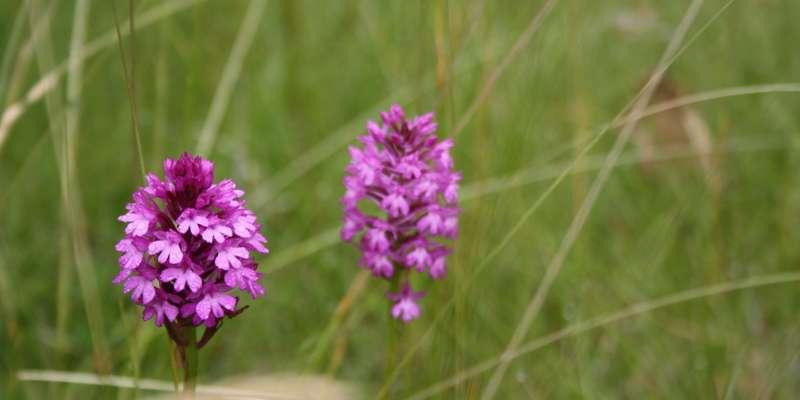 Les orchidées et autres fleurs du Bois de Faral