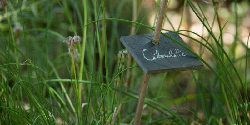 Ciboulette au Bois de Faral
