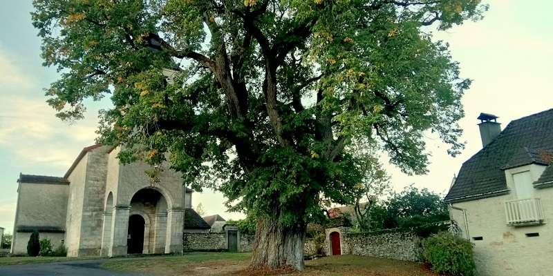 Le Tilleul du Bastit, devant l'église